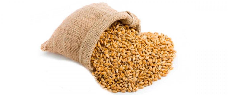 как запарить пшеницу для рыбалки рецепт
