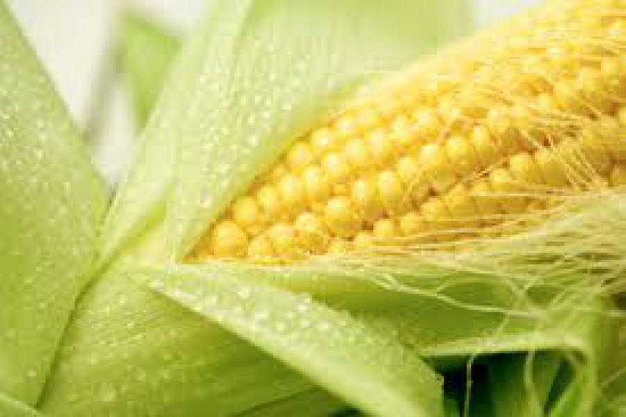 Продукция на продажу кукуруза