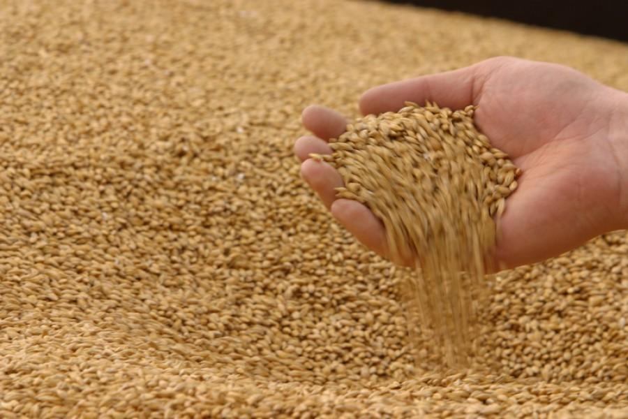 обязательно сколько мы продаём зерна Самаре