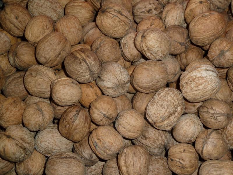 вдруг один грецкий орех продам в майкопе домашнее